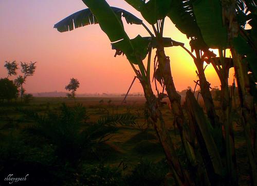 morning pink light shadow sky orange sun color tree colors leaves yellow rural sunrise dark gold dawn golden leaf rainbow day shine village rise bangladesh bangla rajshahi chhayapath
