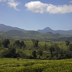 Malabar Tea Estate