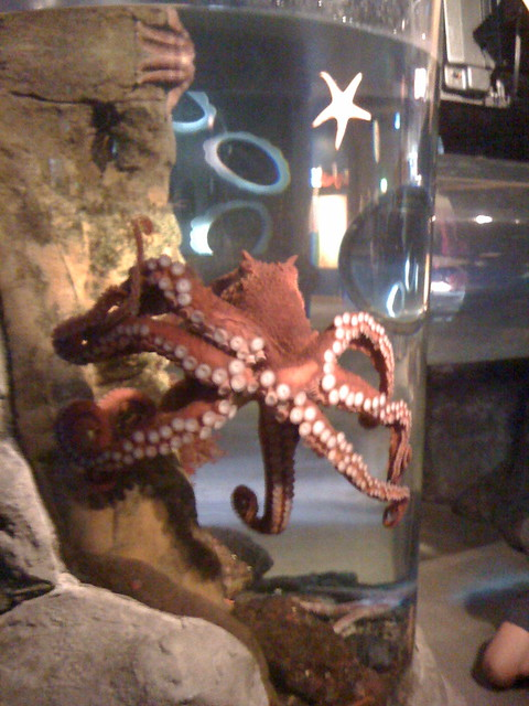 Octopus Seattle Aquarium Flickr Photo Sharing