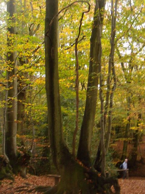 Autumn trees 8