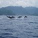 Dolphins St Lucia by Jersey War Tours