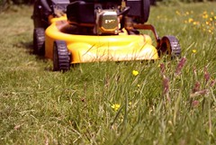 agriculture, flower, field, grass, yellow, vehicle, plant, yard, mower, meadow, lawn mower, lawn,