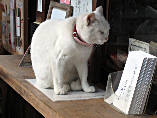 Shinto cat - Umemiya Jinja