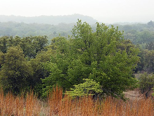 nature landscape nationalpark texas wildlife habitat lbjnationalgrasslands