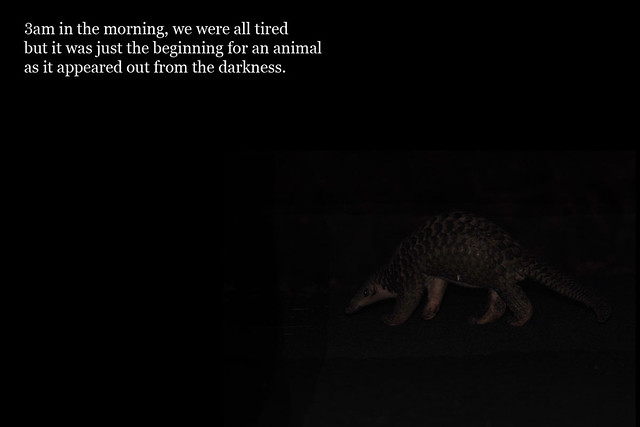 050a_pangolin_emerge