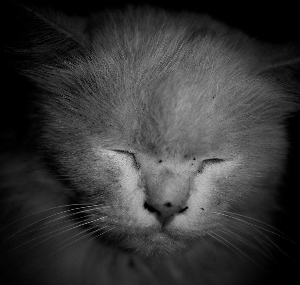 frumpy beast.