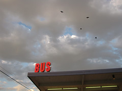 Bus Sign, Sky & Crows