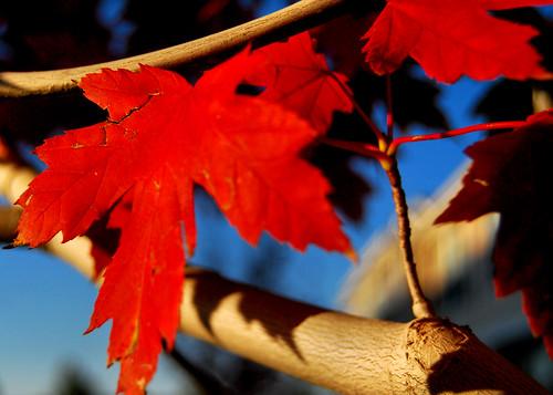 Autumn 2009 (3)