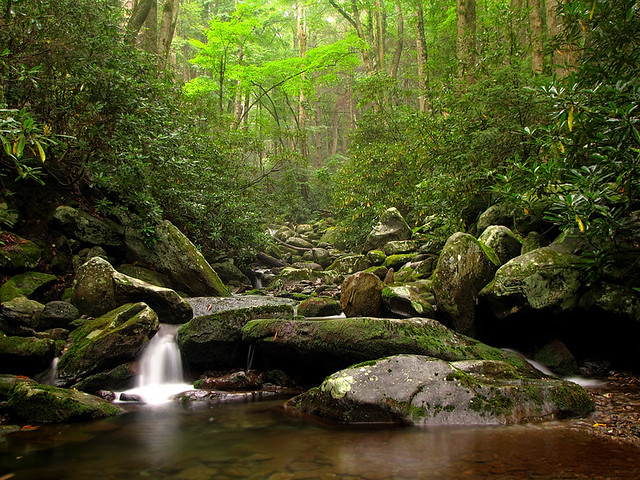 Along rainbow falls trail near roaring fork motor nature for Roaring fork smoky mountains