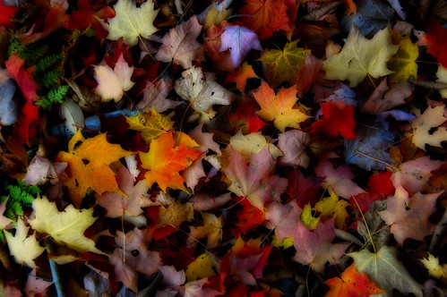 Fallen Leaves of Autumn