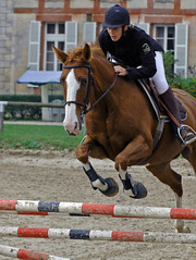 animal sports, equestrianism, english riding, modern pentathlon, eventing, mare, stallion, show jumping, hunt seat, equestrian sport, rein, sports, recreation, outdoor recreation, equitation, horse, horse harness, jockey,