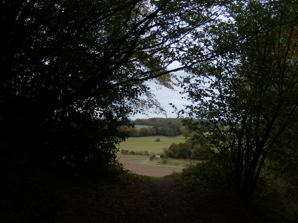 View through a gap Watton-at-Stone Circular