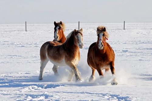 Horses DSC_0183