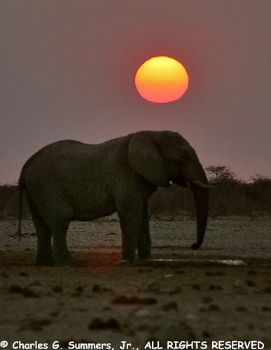 Etosha Elephant drinks at a cistern at last light 108_0858_RJ