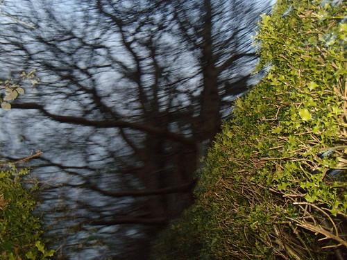 Between holly hedges DSCN8349