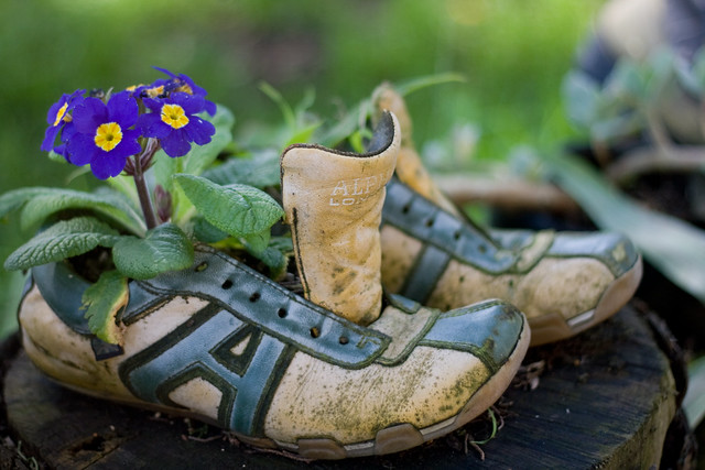 73/365 Shoe garden in full bloom