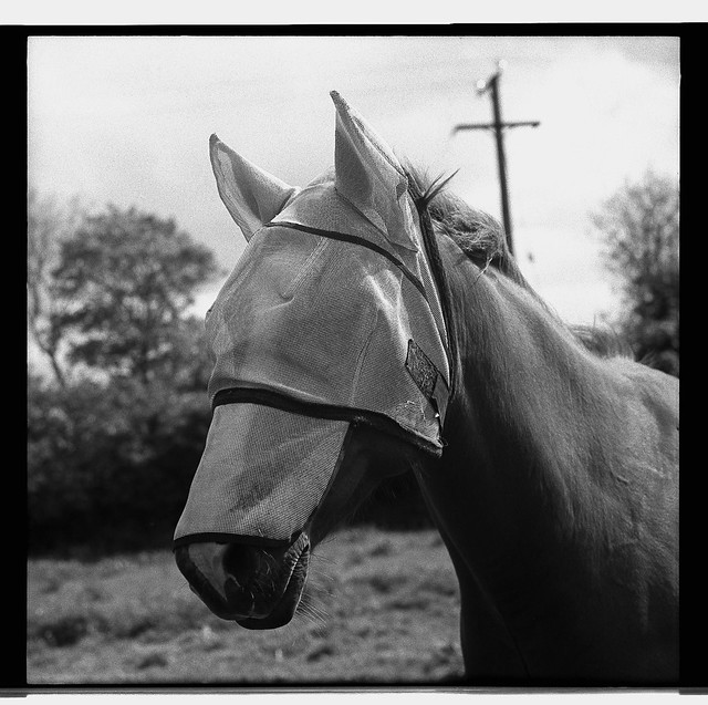 HORSE WITH HOOD