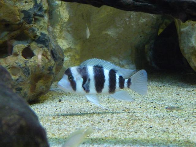 tilapia aquarium de trouville calvados mardi 21