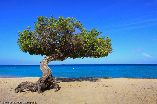 Beach Health Tree Natural Food