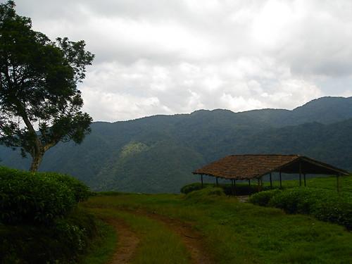 Tea Drying Station