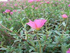 flower in dubai