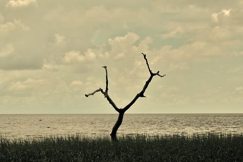 life wild mexico island coast solitude alone gulf florida native wildlife sandy springs remote recreation subtropical pristine