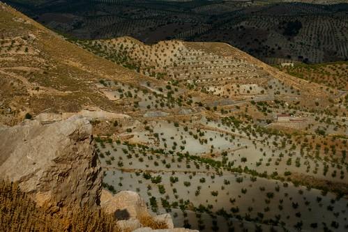 landscape spain andalucia almeria almondgrove santuaria salientealto