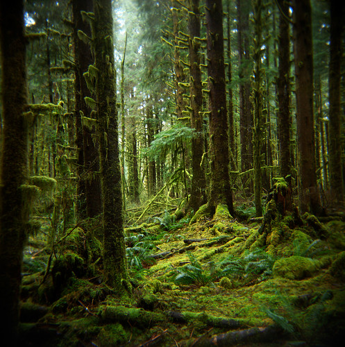 The memory of forests