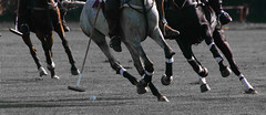 stick and ball games, animal sports, equestrian sport, sports, stick and ball sports, polo, horse, ball game,