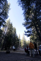 morning in tuolumne meadows campground