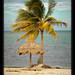 Palapa at public beach, Cancun