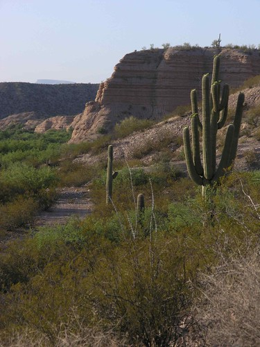 arizona plants usa mountains cacti landscapes desert unitedstatesofamerica gps 2009