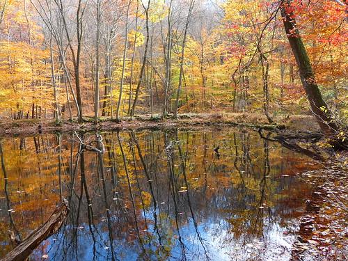 trees tree nature newjersey nj foliage jockeyhollow morriscounty
