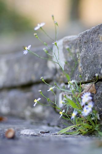 wiki weeds