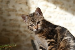 Bagheera the baby cat - Photo of Saint-Sylvain