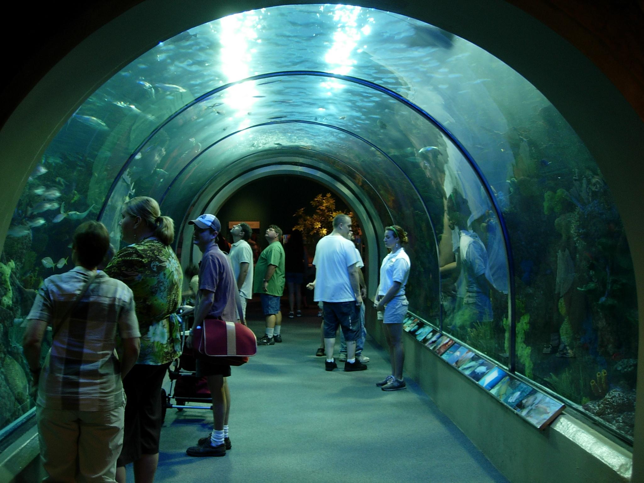 New Orleans Aquarium Flickr Photo Sharing
