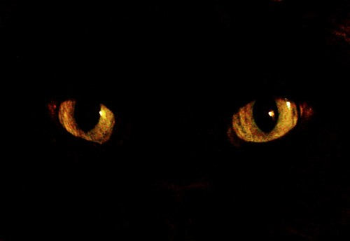 The eyes of an old black cat