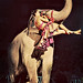 Elephant by Marie's Shots