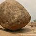 Krishna's Butter Ball...and Goats - Mamallapuram, India