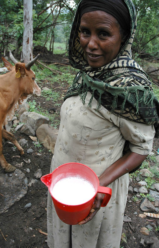 Dairy farming in Ethiopia