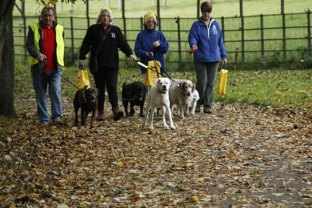 Dog Training Glasgow