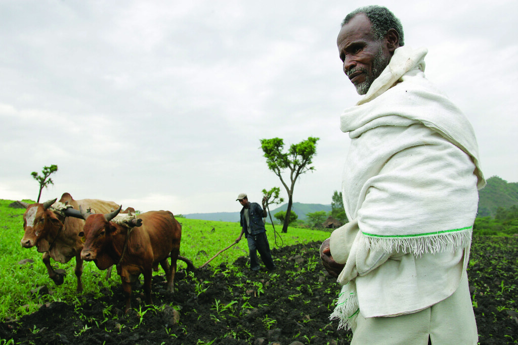 Ploughing with cattle in southwestern Ethiopia