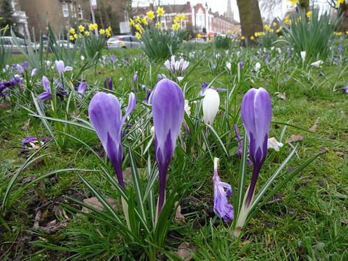 Spring in Blackheath width=