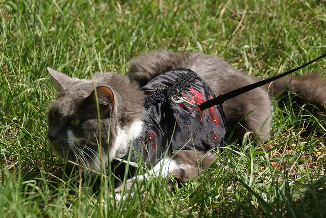 Kitty Holster Cat Harness Uk