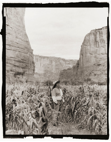 Eddie Draper's cornfield in Canyon de Chelly