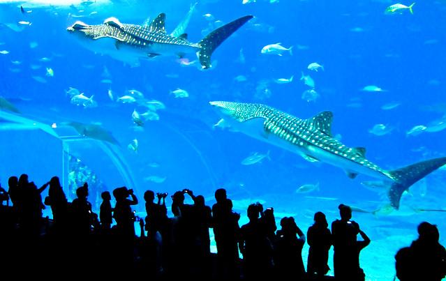 Image Result For Okinawa Aquarium