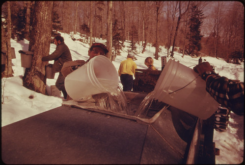 Documerica photo by Jane Cooper. Vermont Dairy Farm and his Neighbor Gather Sap 4/1974