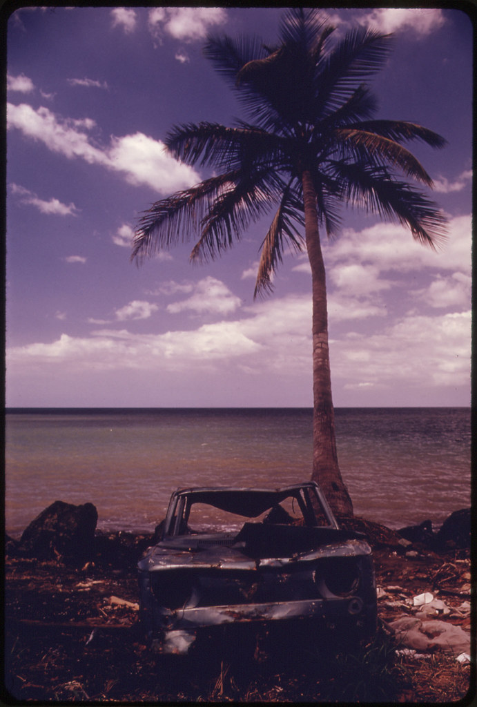 Abandoned Car Under a Palm Tree at Rincon 02/1973