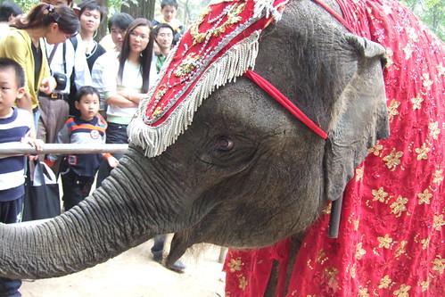 未來,可能只能在馬戲團中看到非洲象。(來源:Good Uncle)