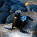 Galapagos Islands-31 by Tristan27